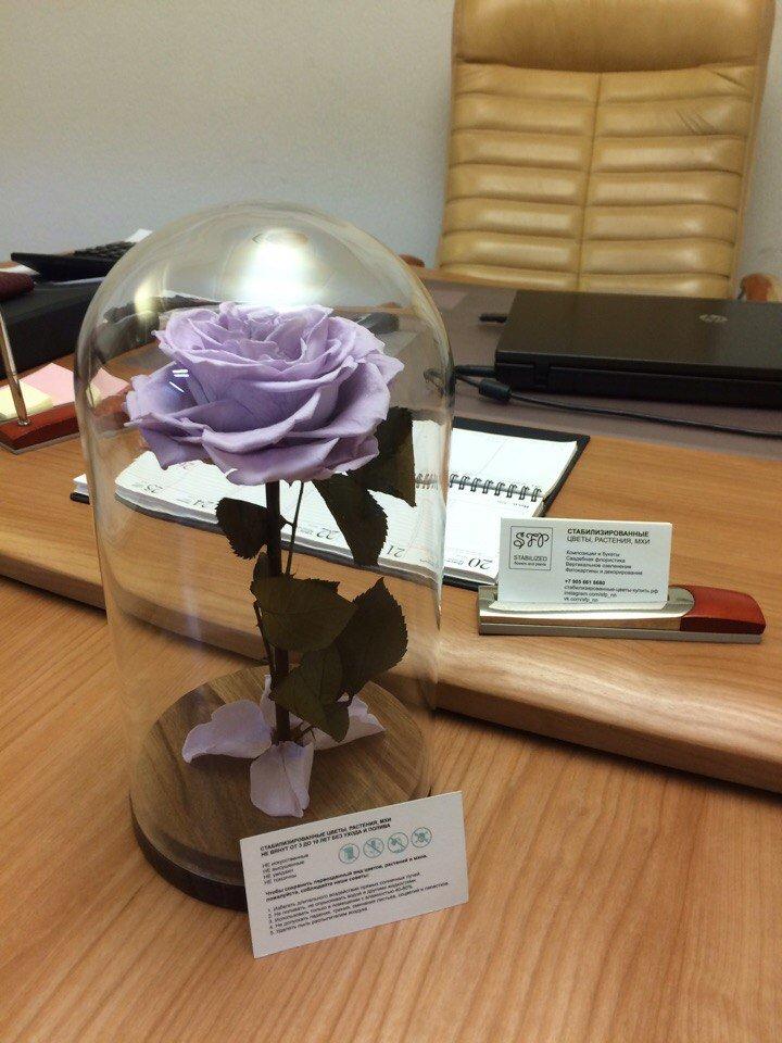 Стабилизированные цветы и растения | SFP -  Отзыв очаровательной основательницы